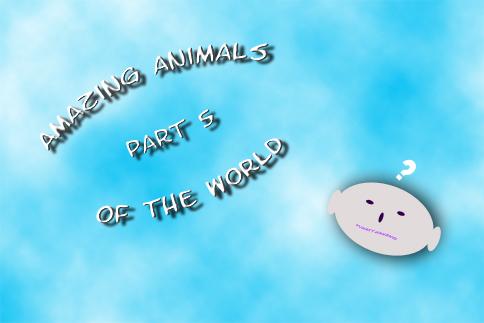 Amazing Animals of the World Part 5