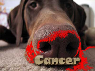 Should Cancer Sniffing Robots Or Dogs Detect Human Cancer