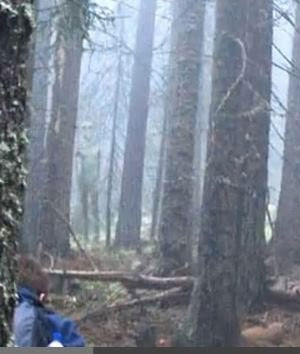Hikers Take Picture of Supposed Grey Alien in Bulgaria
