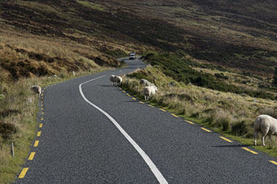 Highway with Sheep in Route