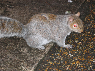 Carnivorous Squirrel Discovered in Argentina