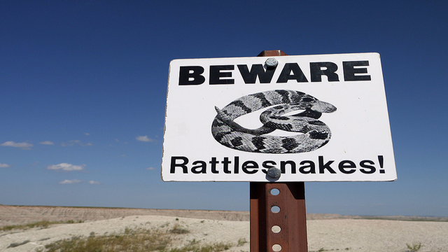 Massachusetts and their Island of Venomous Timber Rattlesnakes