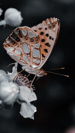 Moths Can be Seen as a Symbol of Transformation or Change