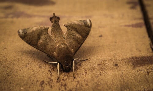 Superstitious Beliefs About Moths: Spiritual Meanings and Significance