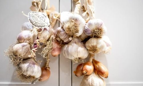 Garlic Spiritual Meaning, Folklore and Superstitions