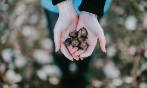 Can You Eat Acorns? | Health Benefits and How to Eat Them