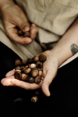 What are the Health Benefits of Acorns?